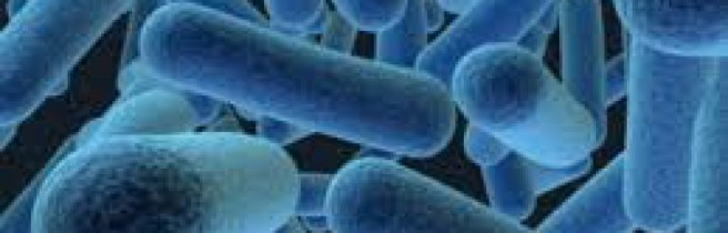 cropped-bacterias.jpg